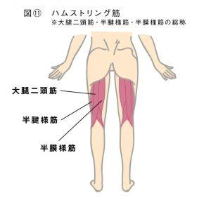 肛門エクササイズでダイエット!図11