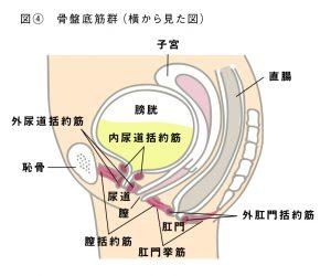 肛門エクササイズ・肛筋トレーニングとは図4