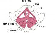肛門エクササイズ・肛筋トレーニングとは図5
