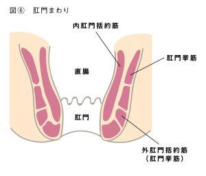 肛門エクササイズ・肛筋トレーニングとは図6